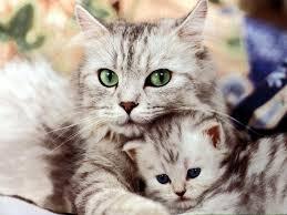 cat n kitten
